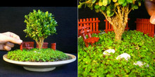 11.11Special products!50pcs juniper bonsai tree Seeds potted flowers office purify the air DIY home garden plant easy to grow