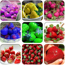 BELLFARM 9 Packs Hybrid Edible Purple Yellow Pink Blue Green Red Giant Strawberry Seeds,  Professional Pack, 100 Seeds / Pack