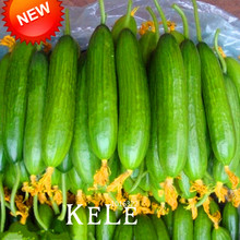 New Fresh Seeds Dutch Cucumber,Cucumber Seeds Fruits and Vegetable Seed 50 Seeds / Bag,#KMT67V(China)