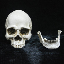 Creative Halloween Horror Spoof Funny Decorative Skull Head Ornament Toy Home Decor
