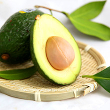10 pcs Avocado seeds Green Fruit Very Delicious Persea americana Mill Pear Seed Easy to Grow,Fruit seeds for Home Garden plant(China)