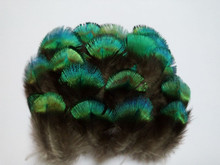 Hot! Free shipping sell 50 pc / lot quality natural Peacock feathers,  3-6cm DIY jewelry decoration