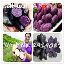 50pcs rare purple sweet potato seeds bonsai exotic delicious mini sweet fruit and vegetable seed diy home garden plant free ship