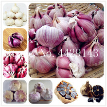 Hot Sale 100 Pcs Garlic Bonsai Pure Natural And Organic Vegetable Bonsai Healthy And Delicious Pungent Spice Vegetable(China)