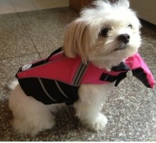 New High Quality Summer Pet Aquatic Reflective Preserver Float Vest Dog Saver Life Jacket Upgraded  with Bartow