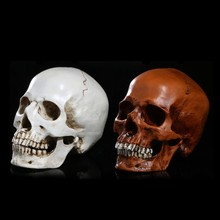 Homosapiens Skull Statue Figurine Human Shaped Skeleton Head Demon Home Decor