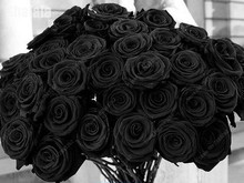 50pcs True Rare Black Rose Seeds, Rare Amazingly Beautiful China Black Rose Flower Lover Diy Plants Home Garden(China)