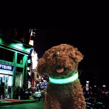 HOT sale LED Dogs Night Safety Pets Flashing Light Adjustable PA6 Collar Leash Green