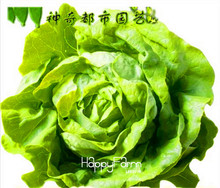 Hot Sale!10 Seed/Bag Italian Lettuce Seeds good taste , easy to grow, great salad choice ,DIY Home seeds vegetables,#OIFVQZ(China)