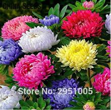 200pcs/lot Aster 'Starlight Mixed' China Aster seeds,flower,courtyard balcony potted home garden free shipping