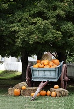 Laeacco Autumn Harvest Pumpkins Haystacks Trailer Photography Backgrounds Vinyl Custom Photographic Backdrops For Photo Studio(China)