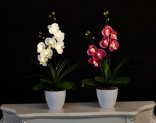"20"" (50cm) LED Blossom Orchid Flower Light 7PCs WarmLED with 2*AA Battery pot , 7 Blossom Orchid Flowers with buds(China)"