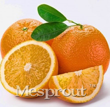 Potted Edible Fruit Seeds mini Bonsai Orange Seeds China Climbing Orange Tree Seeds 100% fresh 30 PCS / bag(China)