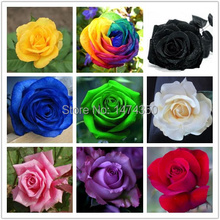 10 Colors 500 Seeds Rose Seeds (50 SEEDS EACH COLOR) With Fully Sealed Aluminum Foil Bag With Sowing Instruction Semillas Rosa(China)
