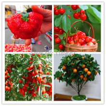 4 kind fruit seeds,include big strawberry seeds and orange ,quality seeds and low price total 500+ seeds(China)