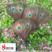 50 PCS/natural Primary colors  peacock feathers in the eye, 10 to 12 inches of the peacock feather wedding decoration plume