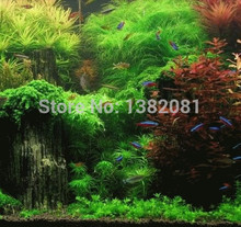 Hot sale 500 Seeds mix kinds of aquarium grass seeds hybrid home aquatic plants DIY easy to plant seed * Aqua Farm in bonsai