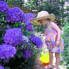 Hydrangea Flower Seeds Gorgeous DIY Home Garden Perennial Bush Yard Bonsai Container Plant-10 Seeds/pack free shipping