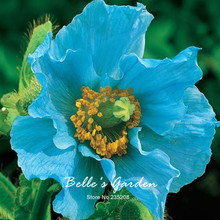 100pcs/lot Rare Blue Himalayan Poppy Seeds Hardy Flower Ornament Poppy Flower Seeds Home Garden Bonsai Plant DIY Free Shipping