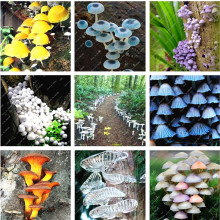 New Arrival! 100Pcs/Bag a Lot Special Mushroom Seeds Funny Succulent Plant Edible Health Organic Vegetable Seeds Mushroom Seeds(China)