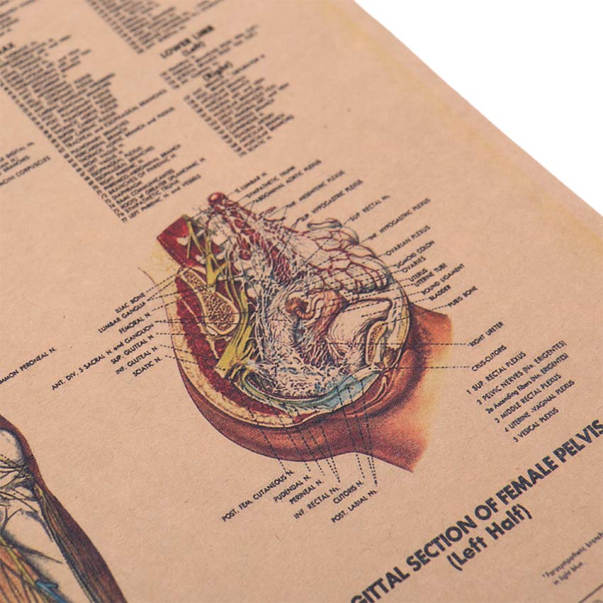 geekoplanet.com - The Nervous System Kraft Paper Poster