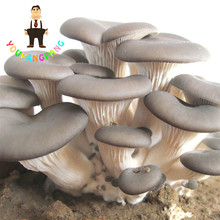 Delicious Mushrooms Seeds, 100 Pcs Vegetable Seeds Rare Pleurotus Mushroom Strains Geesteranus Seed Easy Growing DIY Garden