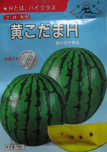 Original Packing ,10G/ pack, Japan watermelon seeds Huang Xiaoyu yellow flesh watermelon seed special sweet watermelon