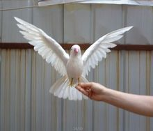 artificial bird white feathers peace bird spreading wings dove bird 30x45cm handicraft prop,home garden decoration gift p2679(China)