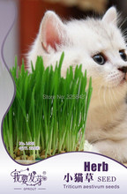 Organic wheat grass seeds, potted cat grass seeds, edible natural pollution-free cat grass seeds - 220 Seed particles