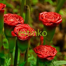30pcs Rare Flower Red Carnation 'Red Up Lamp Bulb' Perennial Flower Seeds Home Garden Bonsai Plant Potted Flower Carnation Seeds