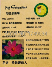 Germination rate 99% pink Cosmos seeds, little daisy seeds, Chrysanthemum seed - 30 particles