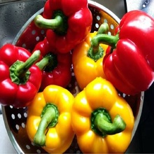 Top Fashion Time-limited Outdoor Plants Very Easy Mini Garden Summer Seeds Pepper Seed Imports - , Colored Mix- 100seeds(China)