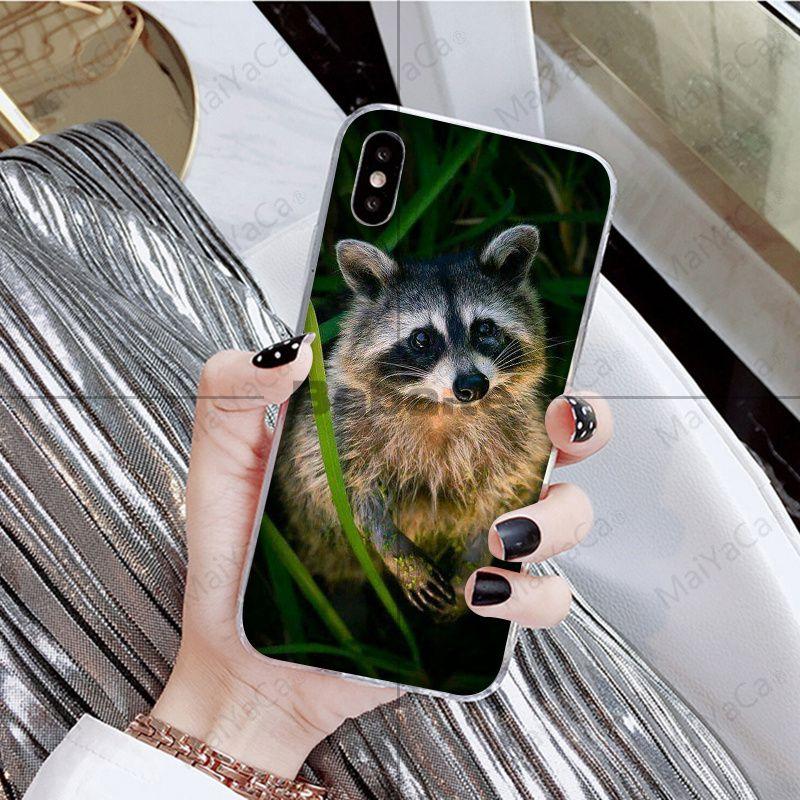 Animal Raccoon Fox