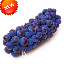 New Arrival!100 Seed/Lot More Particles Summer Black Grape Seeds Advanced Fruit Seed Natural Growth Grape Gardening,#AKY5EW(China)