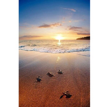 New 5d Rhinestones Diy Diamond Mosaic Diamond Painting Cross Stitch Kits Full Drill Fabric Diamond Embroidery Sea Turtles Decor