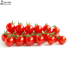 Renrong Bright Red Cherry Tomato Seeds 20+