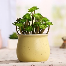 Home Office Gypsophila Multicolored Ceramic Pots Mini Flowerpot Ceramic Flowerpot Garden Nursery Pots for Succulent Plants