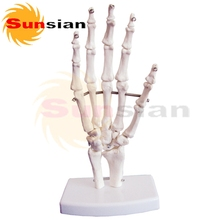 The model of hand bone ,human skeleton anatomical model(China)