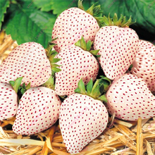 300pcs White Strawberry seeds,White Snow Alpine Strawberry,Fragaria Vesca Fruit seeds,Fresh Exotic Seeds for Home Garden plants