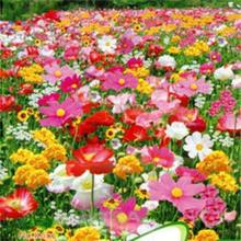 1 Bag 200 Seeds Wild Flowers Easy Grow Practical Cheap Mix Wild Flowers Seeds New Portable Perennial(China)