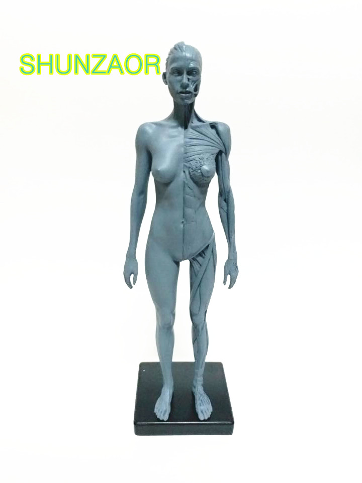 SHUNZAOR 30cm Human Female ps4 Model Anatomy Skull Head Muscle Bone Medical Artist Drawing skeleton for sale<br>
