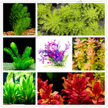 100pcs/bag mixed species water plants fish tank aquarium decoration grass seed aquarium plants seeds