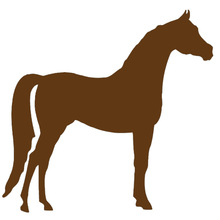 Wholesale 20pcs/lot Arabian Horse Graphic Car Sticker for Truck Tractor Vinyl Decal Standing Tall Animal Cartoon Images Handsome