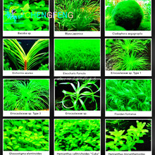 Hot Sales 100pcs Variety Of Aquarium Grass Seeds (mix) Family Of Water Aquatic Fish Tank Very Easy To Plant Sementes Bonsai