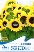 Buy 2 Get 1!(Can accumulate ) 1 Pack 20  Seeds Beautiful Lovely Big Yellow Cut-flower Sunflower J002
