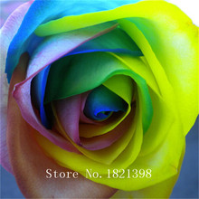 (THIS ORDER INCLUDE  50 SEEDS)CHINESE ROSE SEEDS - Rainbow Pink Black White Red Purple Green Blue Rose Seeds