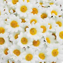Hoomall 100PCs Mini White Daisy Flower Artificial Silk Flowers Party Wedding Decoration Home Decor Wedding Flowers(without stem)