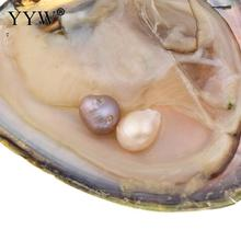 YYW Women Mom Mysterious Birthday Gifts Natural Freshwater Cultured Love Wish Pearl Oyster Mussel Shell Vacuum-pack Oyster