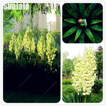 100 Pcs Exotic Pteris Orchid Seeds High Quality Ornamental-Plants Romance Household Bonsai for Flower Pot Planters(China)