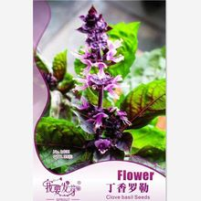 35 pcs/bag Lilac Basil Seeds, Original Package Super Easy Grow Garden Bonsai Spice Seeds Ocimum gratissimum